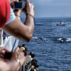 Whale Watching : Collection of pics from whale watching trips I've taken.