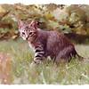 Tiger, son of Momcat - 1979